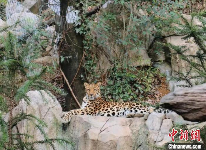 """Nanjing zoo asks for public support through """"adopting"""" zoo animals"""