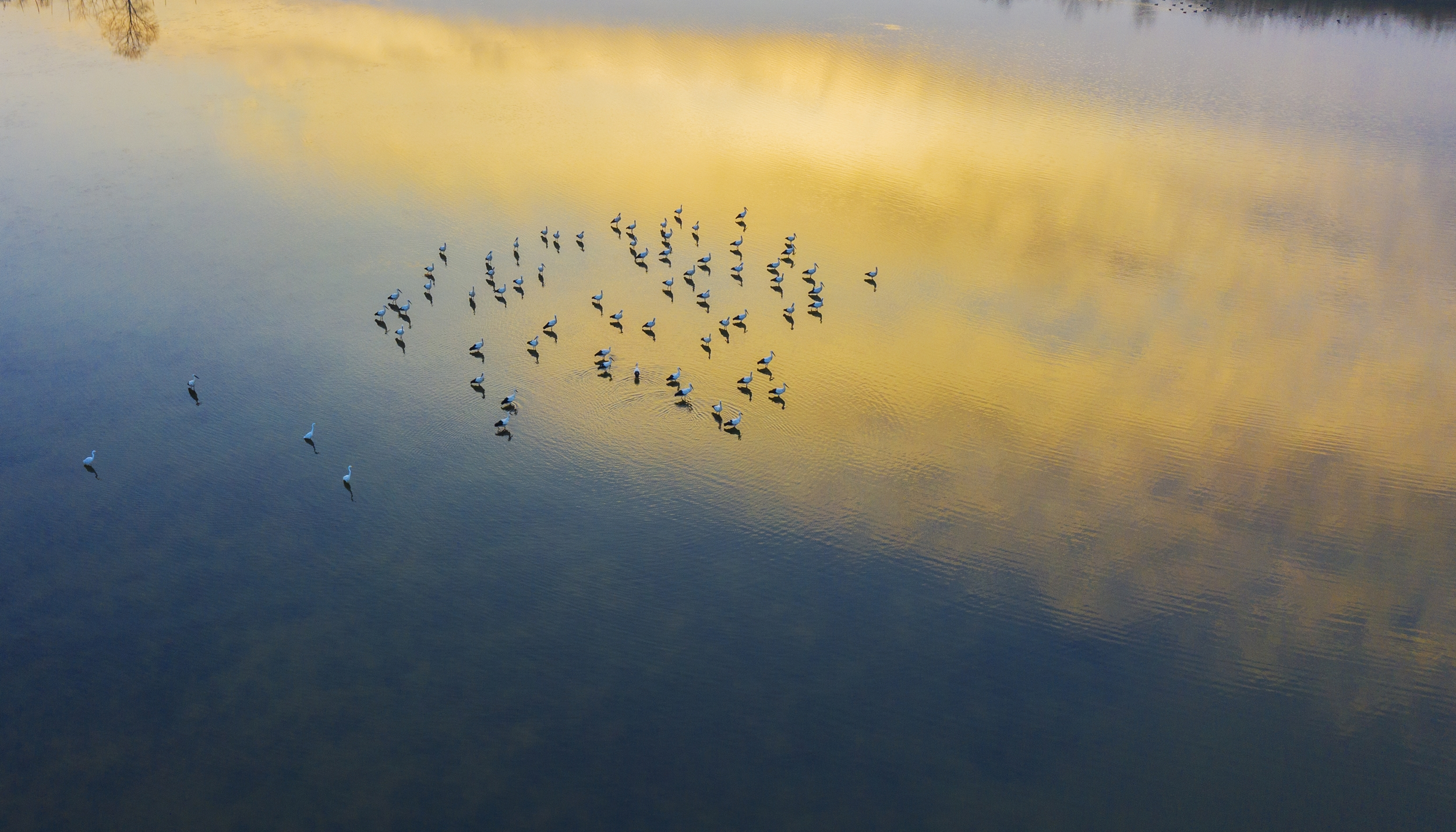 Oriental white storks perch in wetland in E China