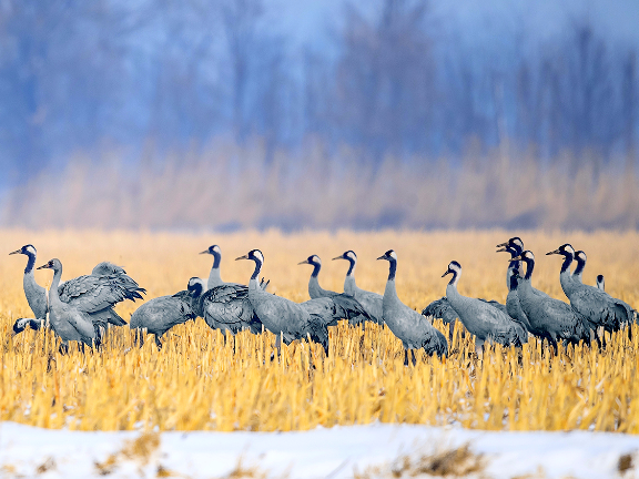 China adds 517 types of wildlife to state protection list