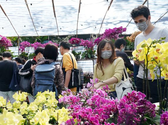 Hong Kong scales down Lunar New Year flower trade amid pandemic