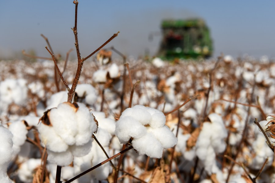 China's cotton imports expand in 2020