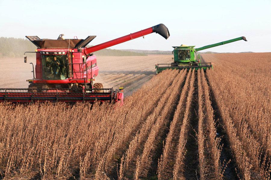 China to promote GMO research, development