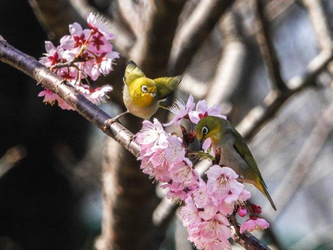 In pics: white-eye birds at garden near Xuanwu Lake in Nanjing