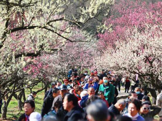 Festival featured with plum blossom kicks off in Nanjing, E China