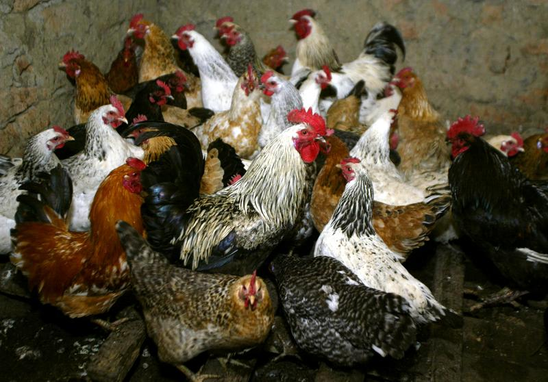 Russia reports first human cases of bird flu