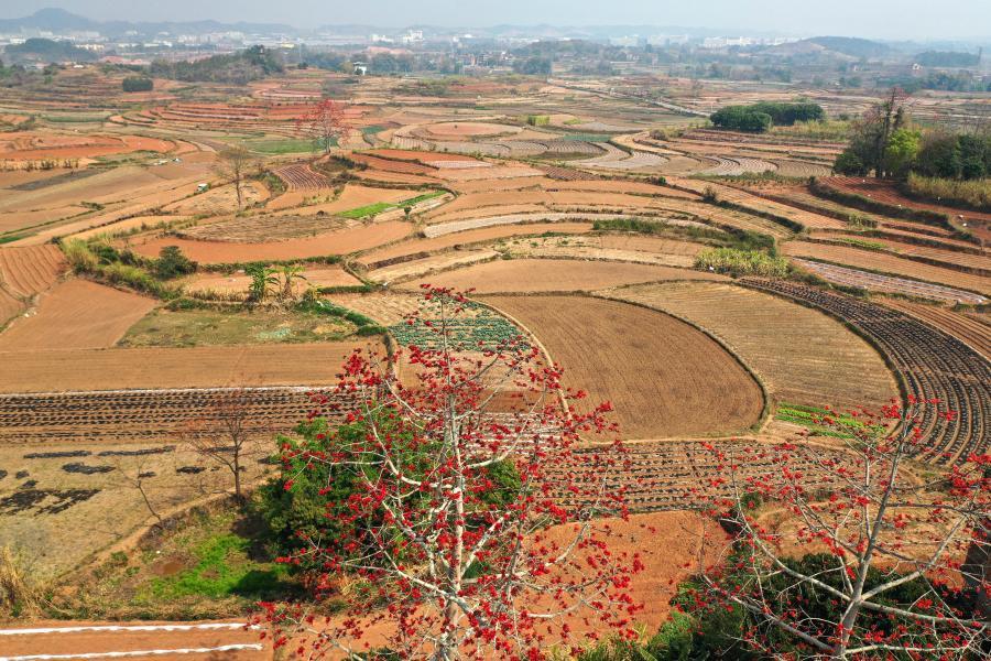 Farmers busy with farm work across China