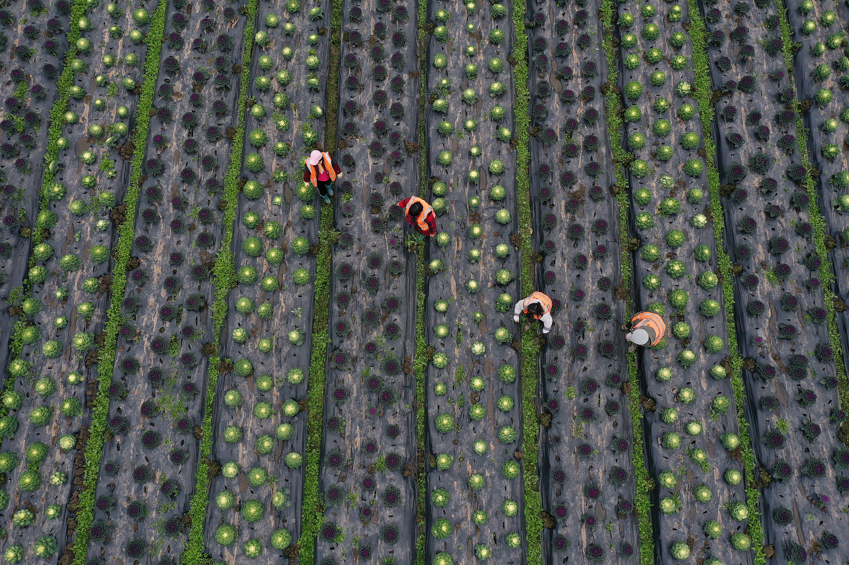 China to fully advance rural vitalization, facilitate modernization of agriculture, rural areas