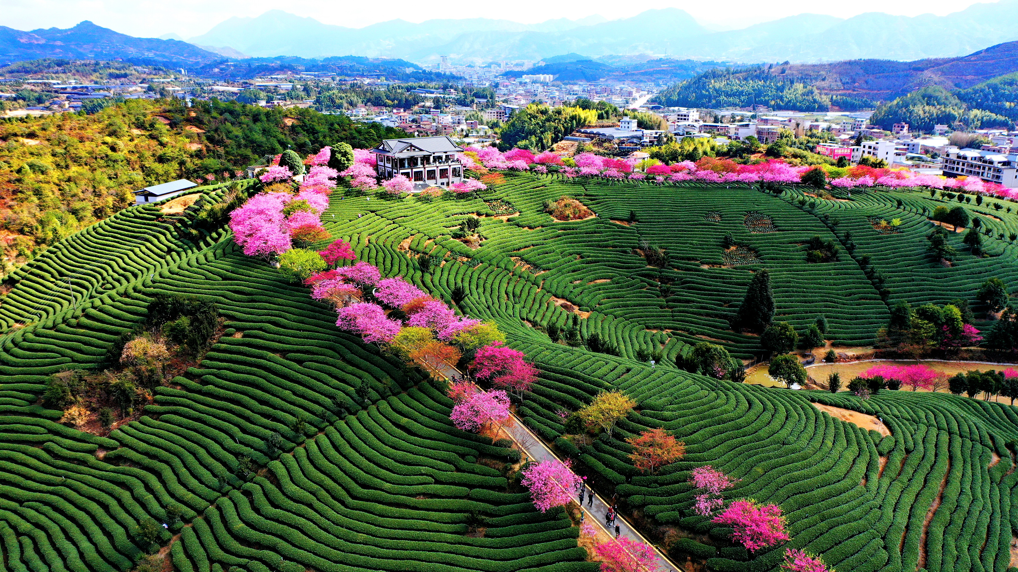 Cherry blossom attracts visitors inEast China's Fujian