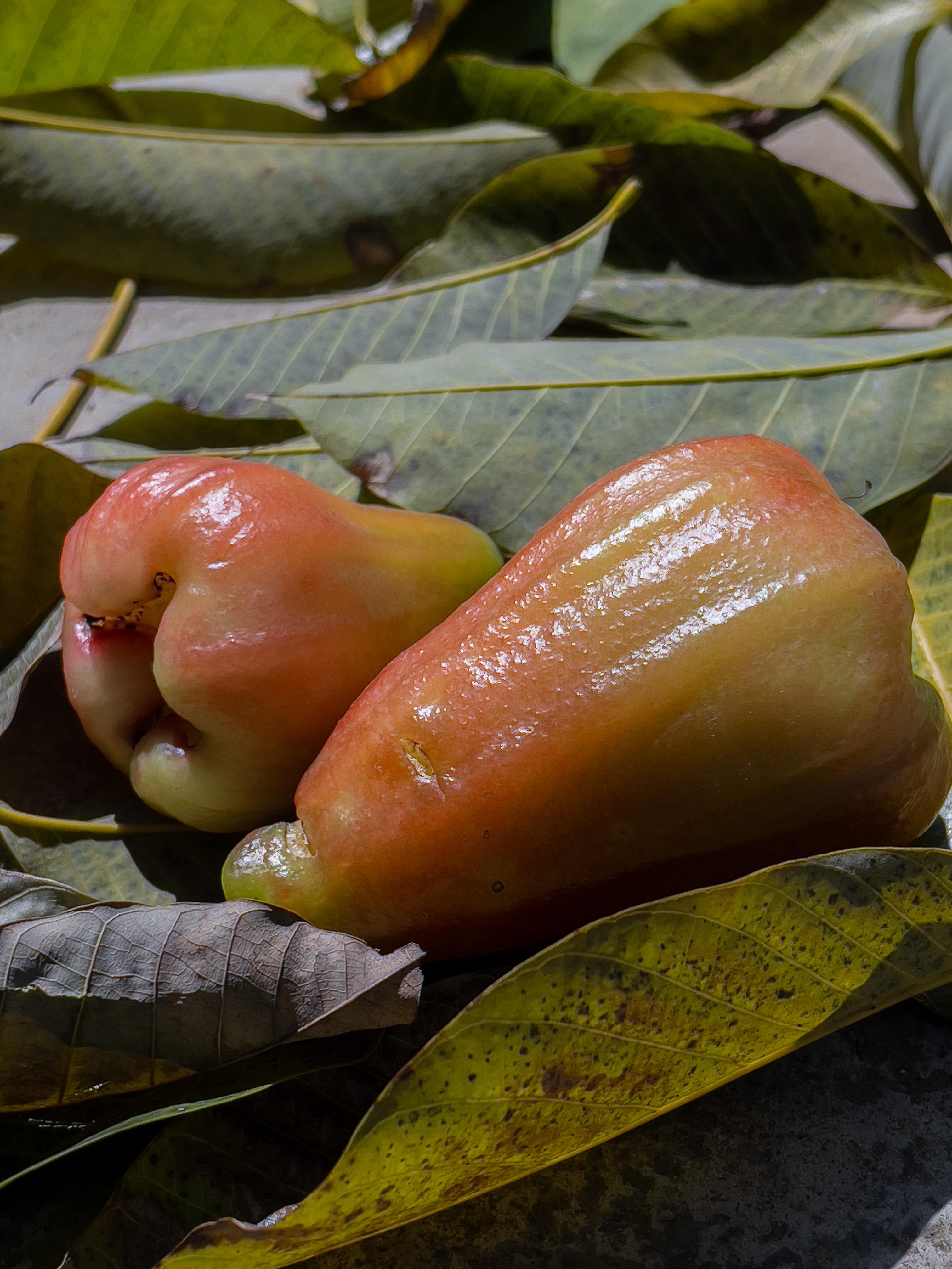 Wax apple: juicy, crunchy and refreshing