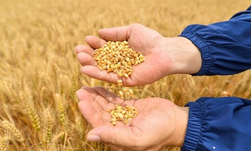China to reinforce agricultural seed breeding sector to shore up national grain security