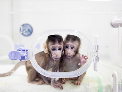 NYT ridiculed for double standard against China for shortage of lab monkeys and the ban on wildlife sale