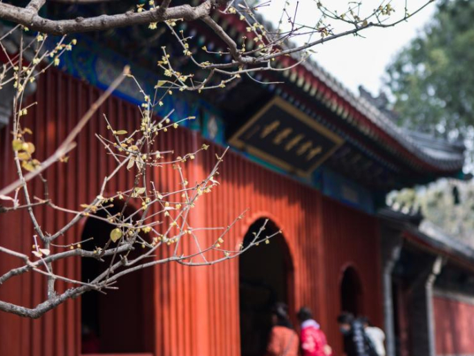 Wintersweet blossoms at Wofo Temple in Beijing