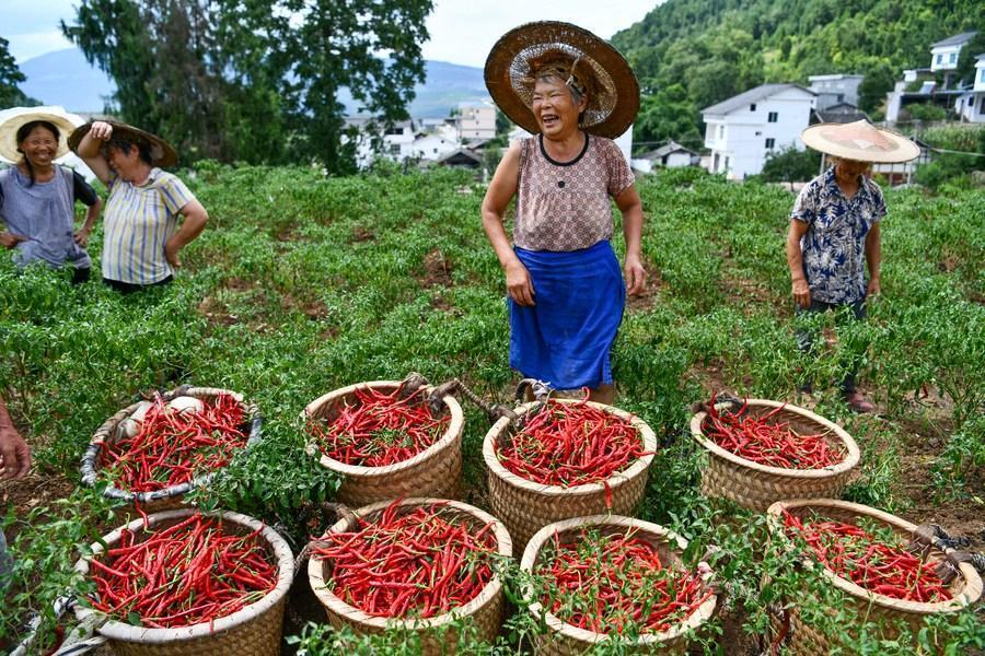 Buzzwords on China's poverty alleviation