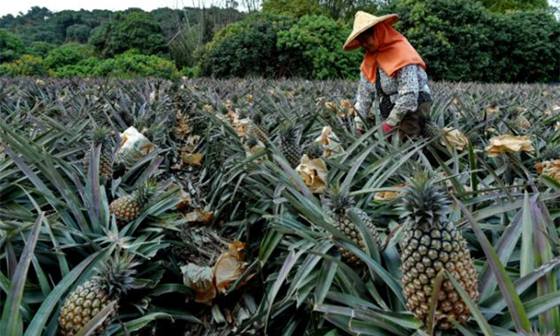DPP hypes mainland pineapple ban to serve its own interests