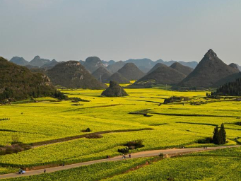 Scenery of cole flower fields in Yunnan
