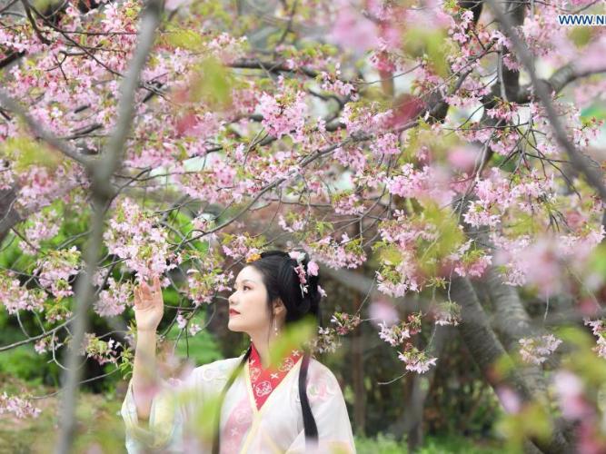 Cherry blossom festival kicks off in Wuhan