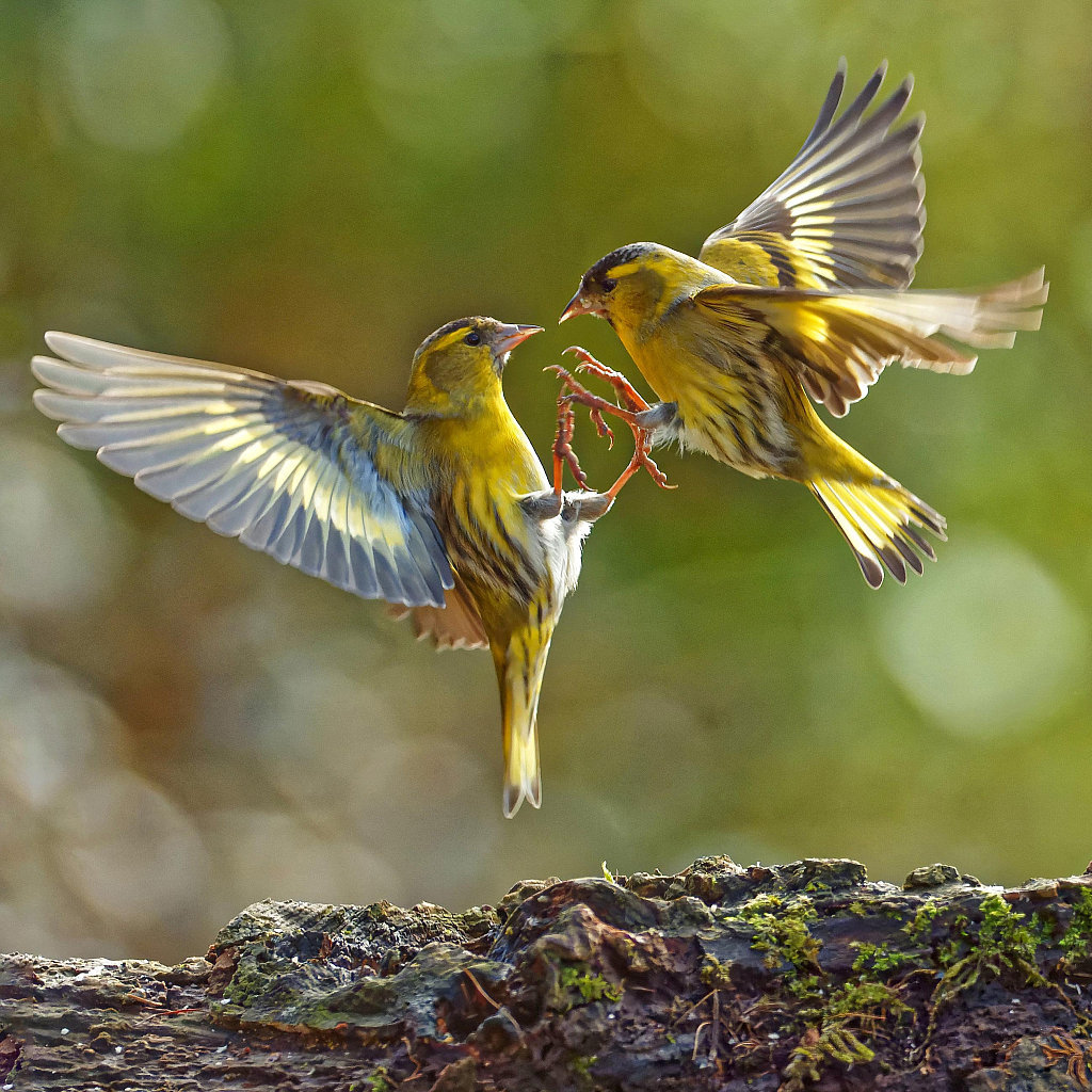 Wildlife photographer takes extraordinary photos of birds under lockdown