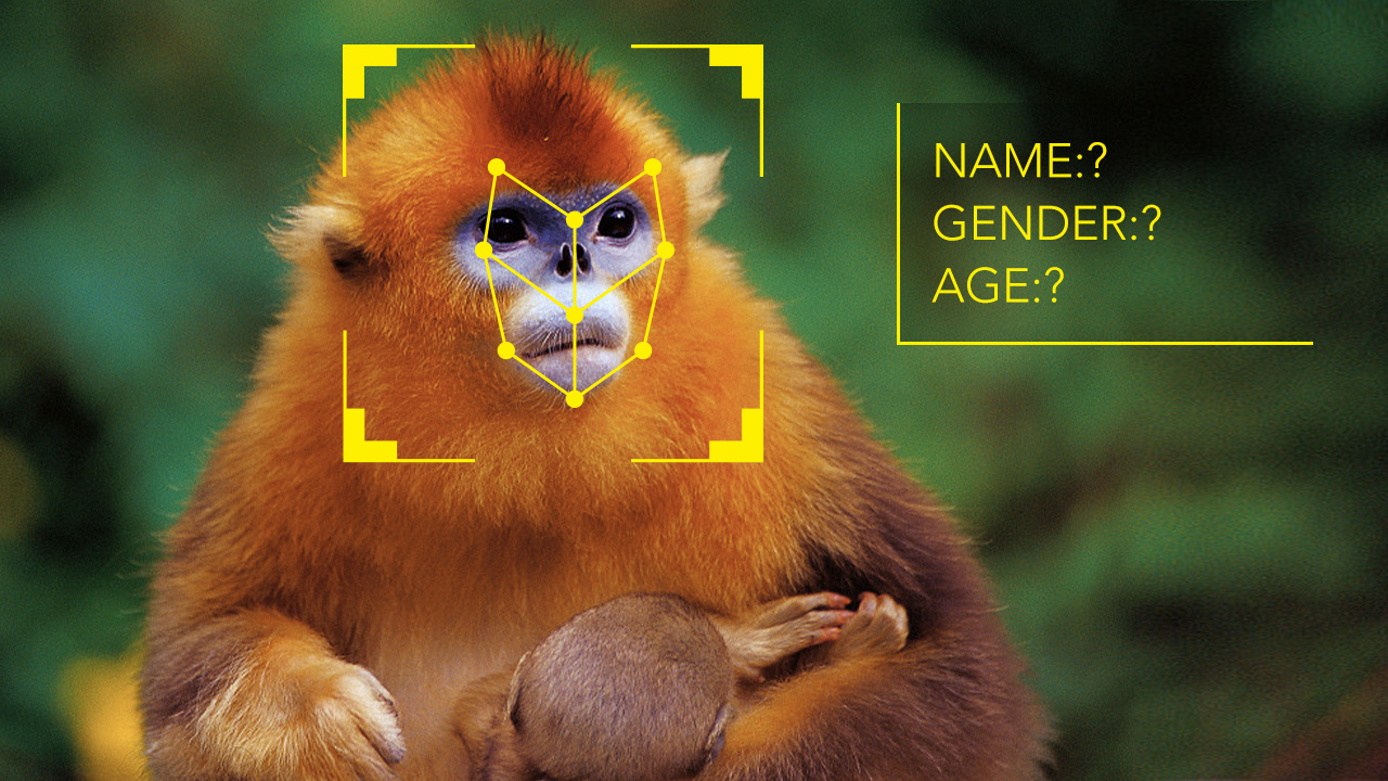 Chinese scientists use facial recognition AI to track monkeys