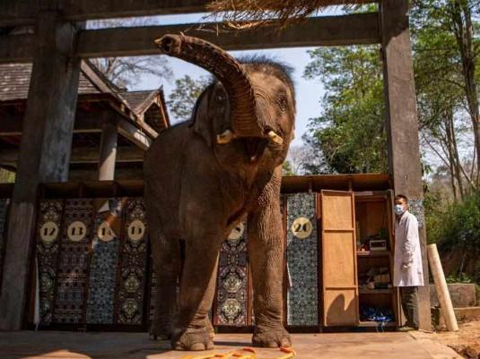 In pics: Asian elephants in Yunnan
