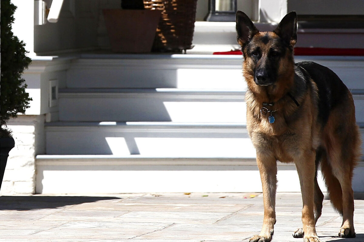 Biden's dog hurts someone at White House