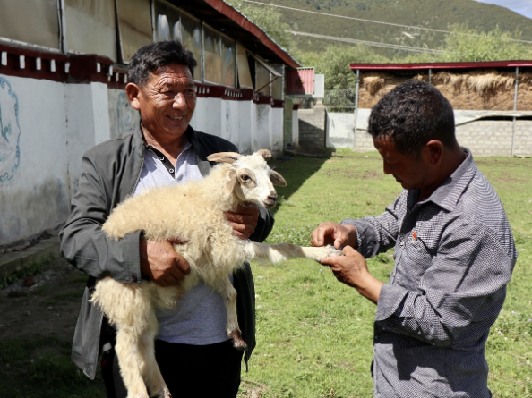 Tibet cooperatives played key role in ending poverty