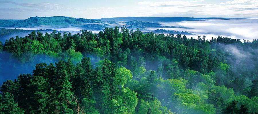 China to continue promoting afforestation, protecting forests: official