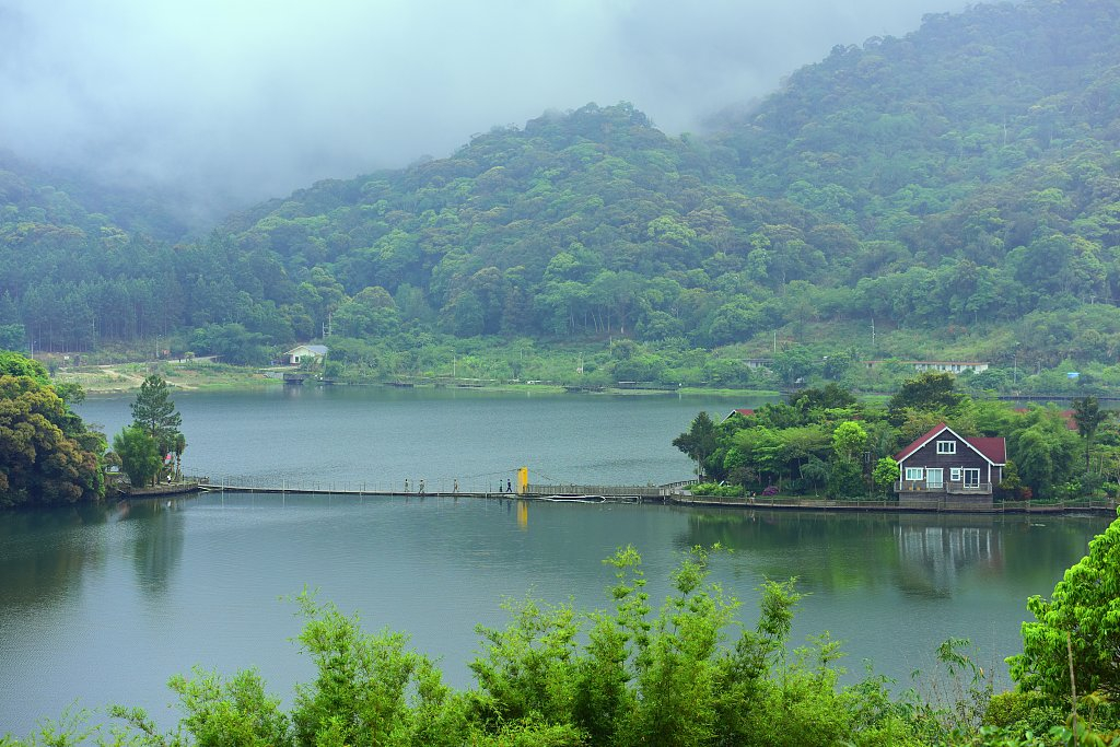 China's land-greening efforts gain ground in 2020: report