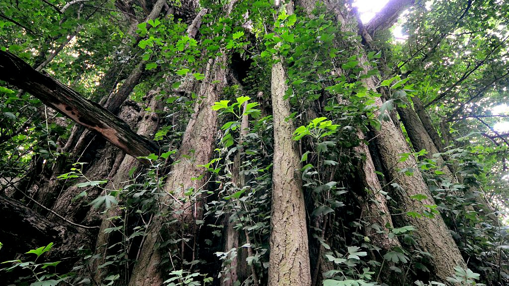 China records significant expansion in forest assets