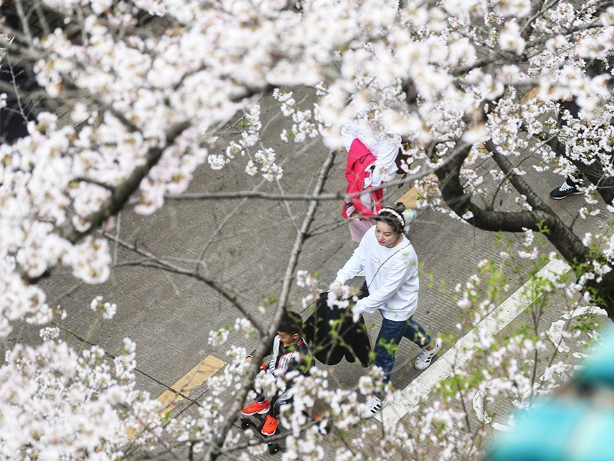 Medics around China return to Wuhan – this spring to enjoy cherry blossoms