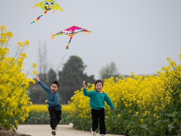 Scenery of cole flower in Sichuan