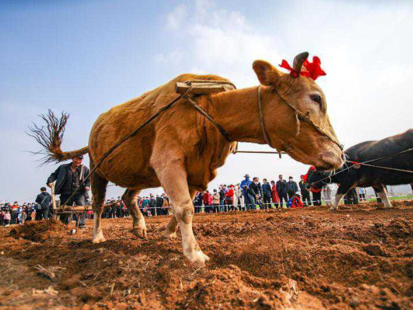 People celebrate Longtaitou Day with various activities
