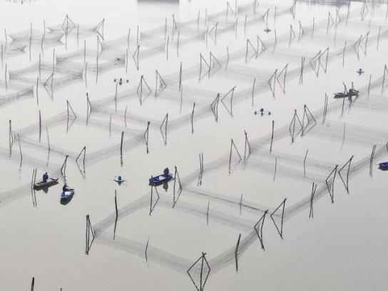 Farmers feed basses in Deqing County, Zhejiang