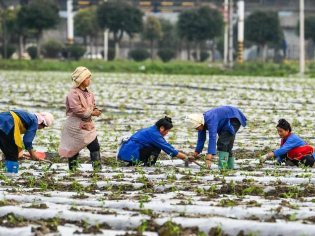 People busy with farming work in Guizhou
