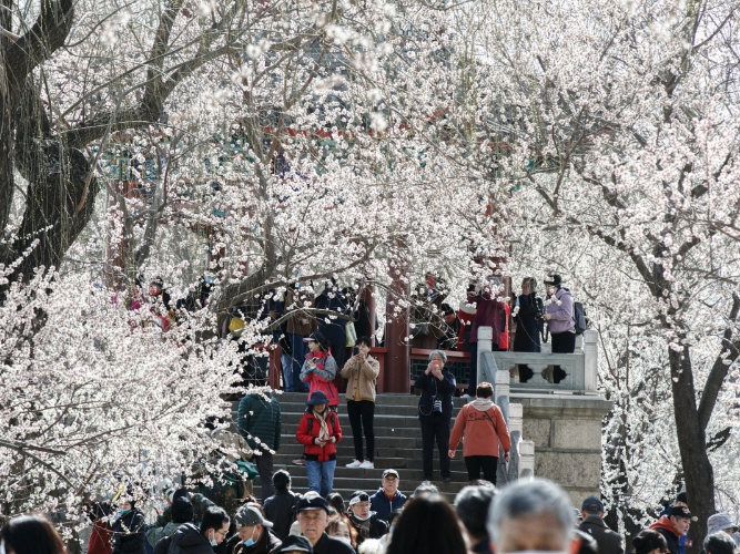 Peach blossoms draw crowds at Summer Palace
