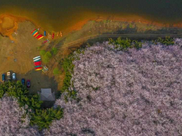 Scenery of cherry blossoms in Guizhou
