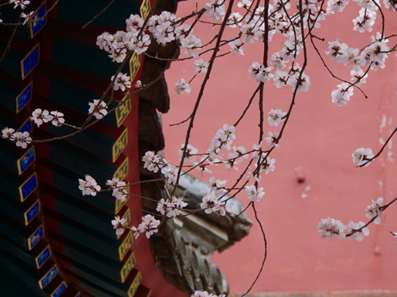 First signs of spring in Beihai Park