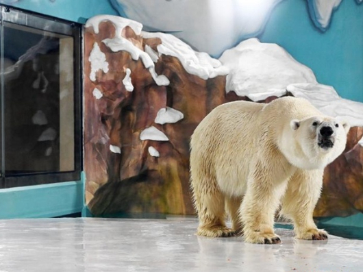 Polar bear hotel rejects criticism, saying animals 'taken care of'