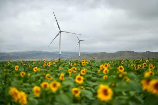 China dominates global wind power industry in 2020: UK media
