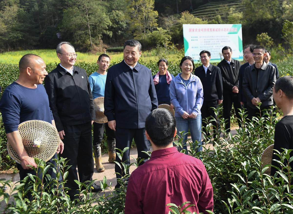 Xi's stories: Xi's special bond with Fujian tea