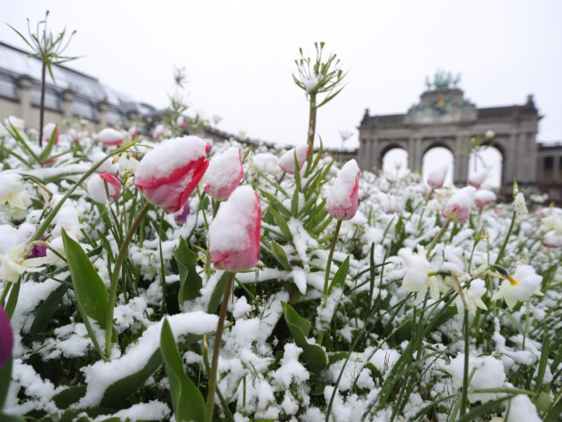 Rare April snowfall hits Belgium