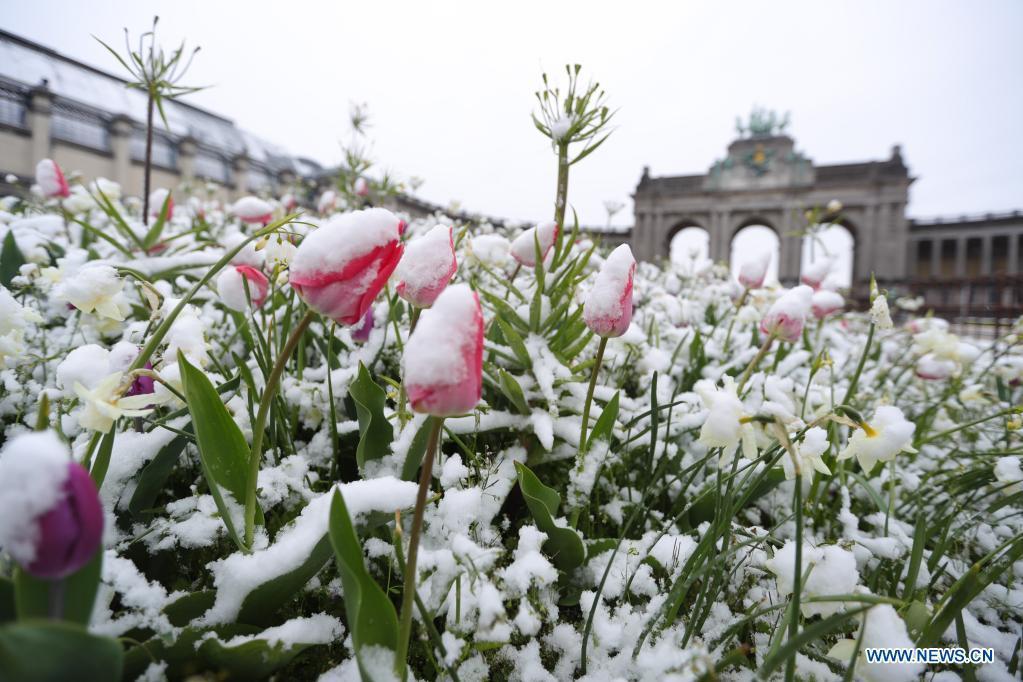 Rare April snowfall hits Belgium