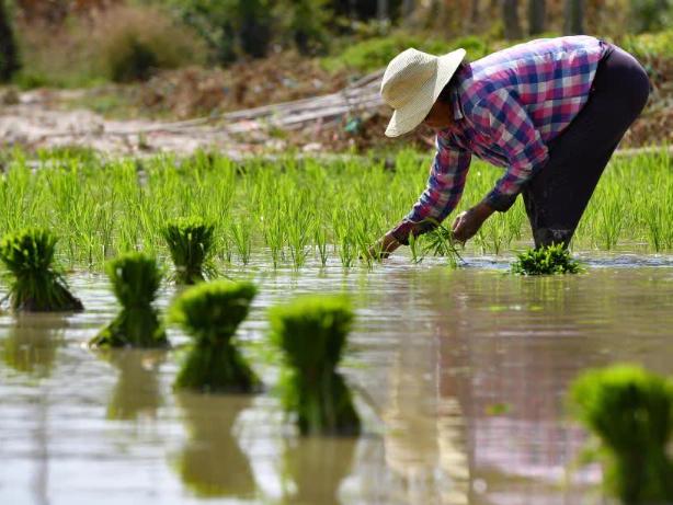 China's beautiful scenery in spring ploughing season