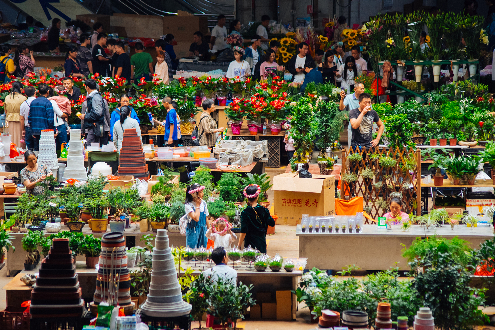 Auctioned transaction at Kunming flower market down 6.8 pct