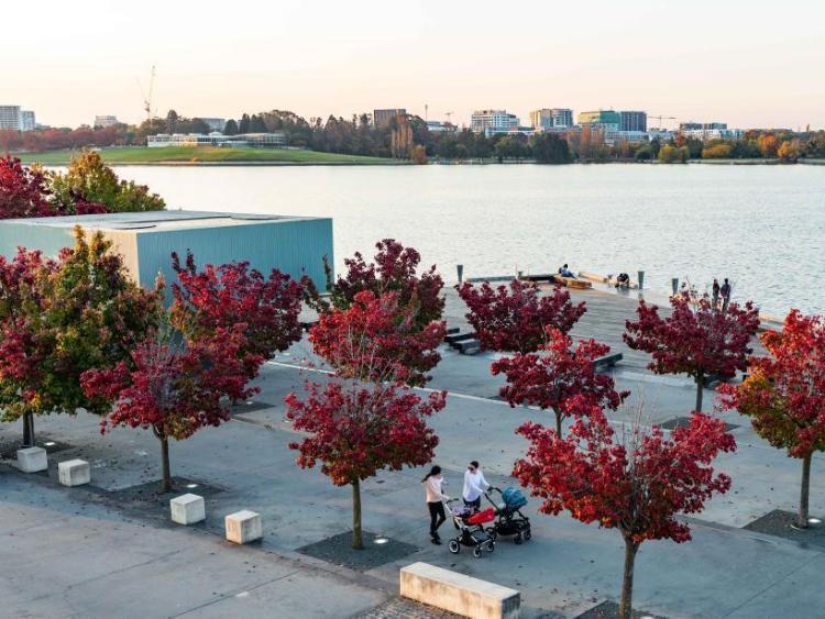 Autumn scenery of National Arboretum in Canberra, Australia