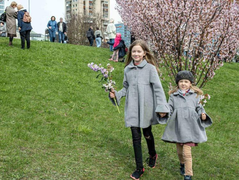 People enjoy cherry blossoms at park in Vilnius, Lithuania