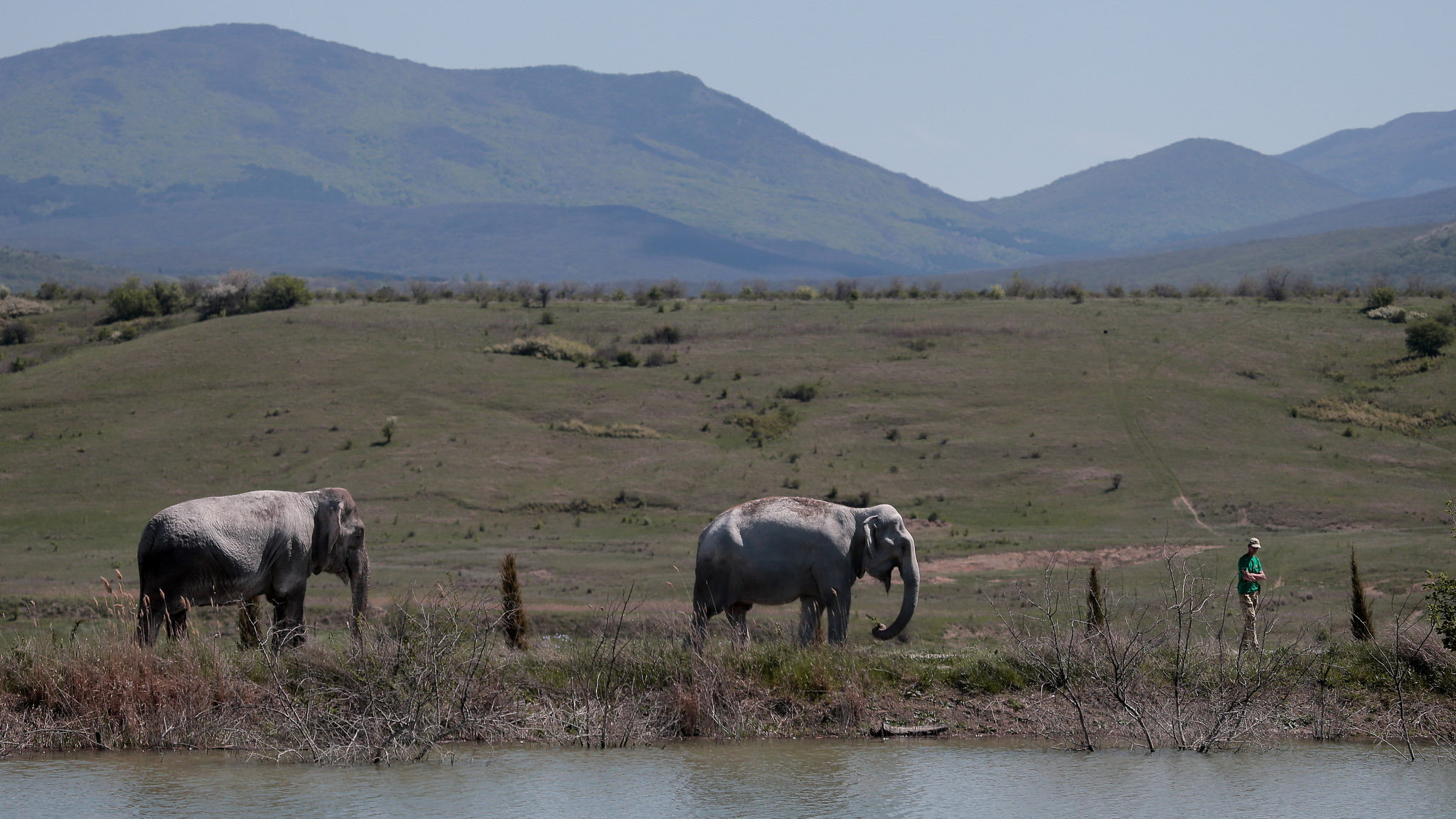 Crimean safari park opens enclosure for retired circus elephants