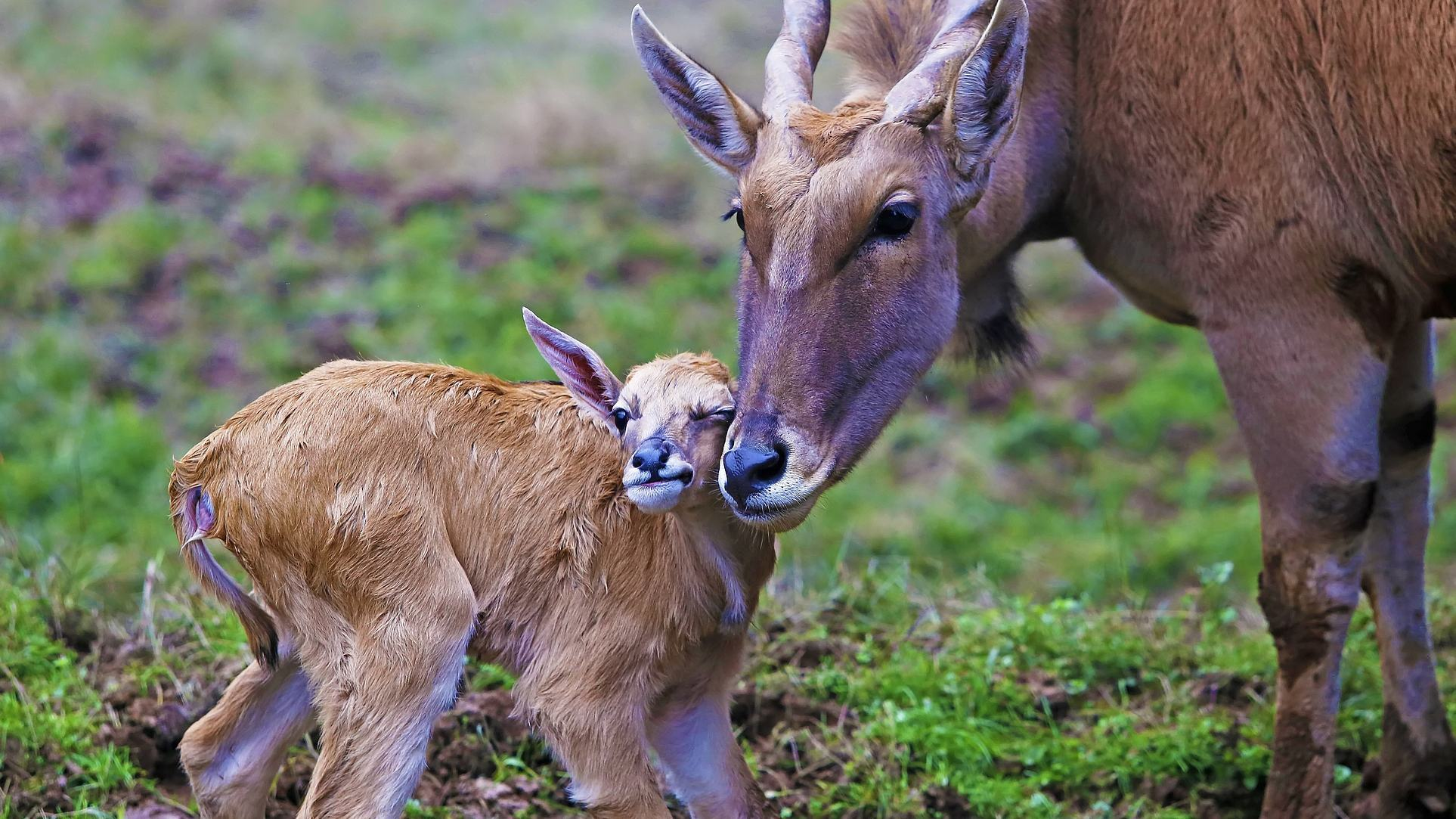 Mother's Day: Let's celebrate the day for animal mothers too!