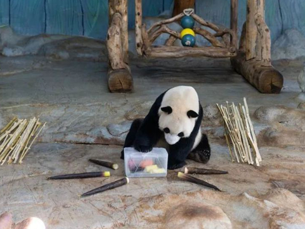 Hainan zoo helps keep animals cool in scorching summer