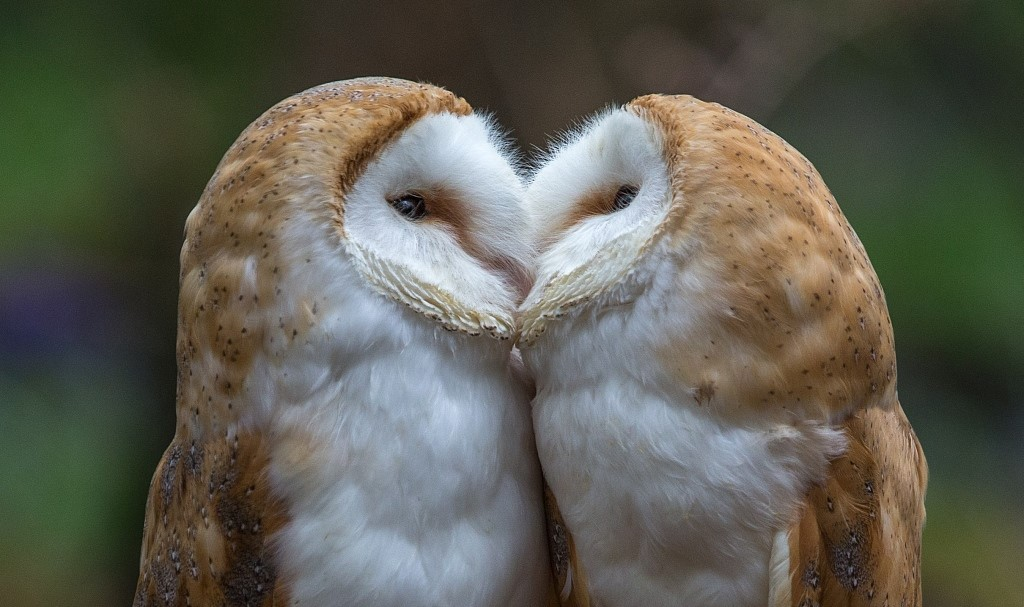 Animals also do public display of affection