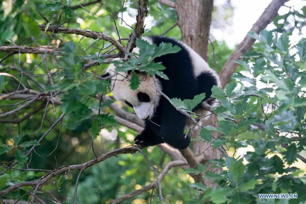 In pics: giant panda cub at Smithsonian's National Zoo